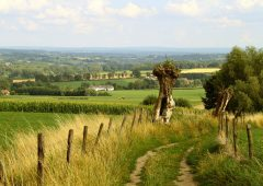 CLA warns of crop damage caused by walkers not sticking to paths