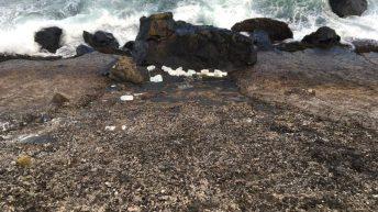 Reward for information about culprits who dumped milk on Antrim coast