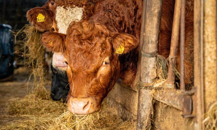 Beef prices strengthen again in Northern Ireland