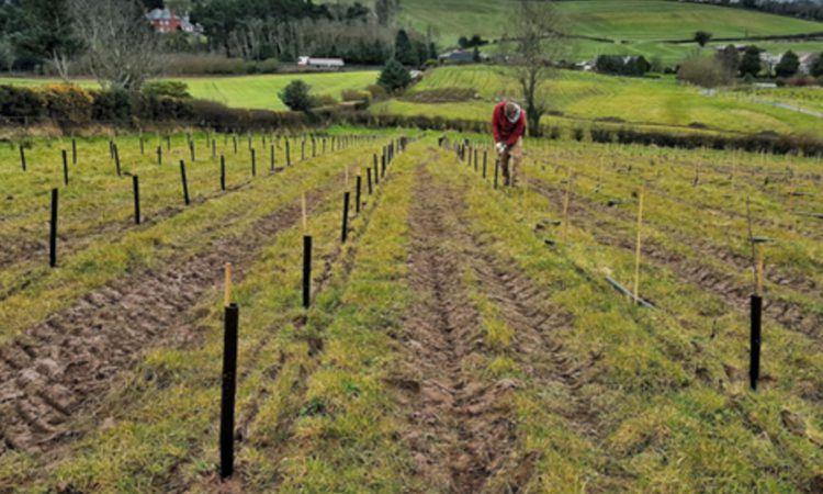 Lyons urges NI farmers to get planting before time runs out