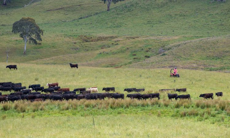 How an Australian cattle rancher sold Microsoft $500,000 of carbon credits