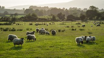 NSA warns of potential 'unintended consequences' of new farming schemes
