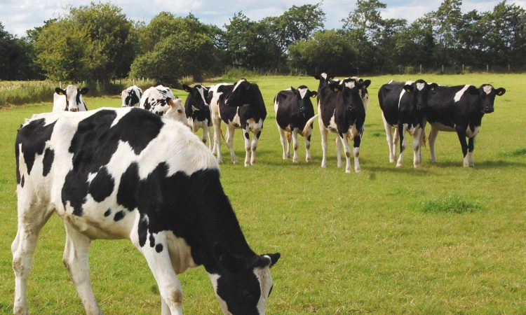 Grazing targets for replacement dairy heifers