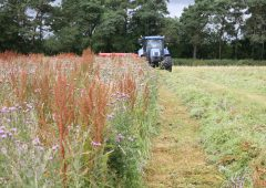 Rat's-tail fescue – another grass weed we don't need