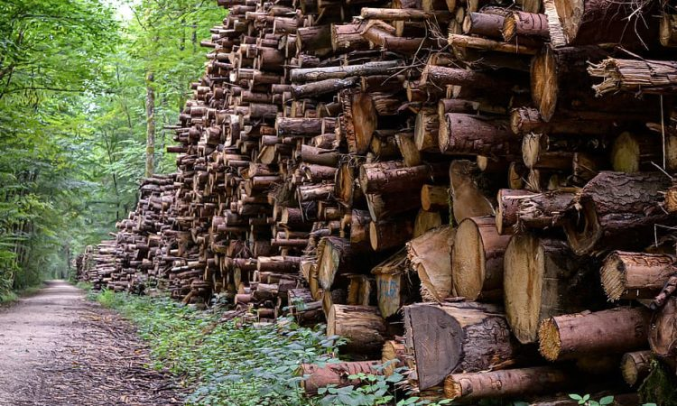 Forestry Commission to simplify licence application process