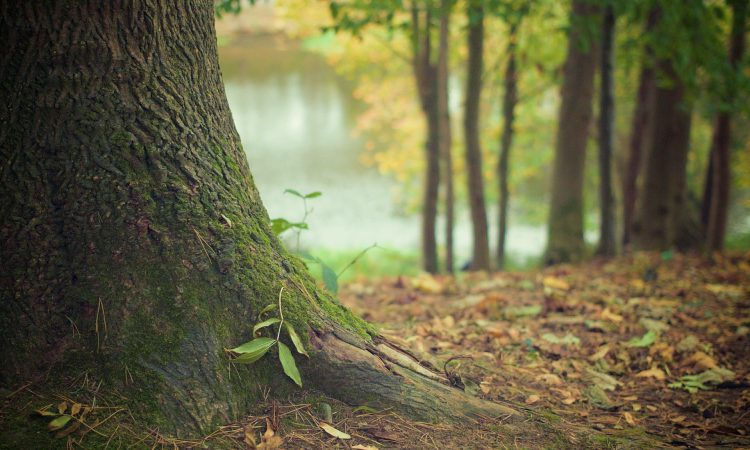 £15 million woodland creation grant opens for applications