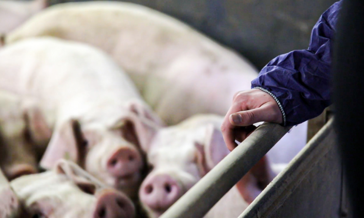Public-private partnership required to help control African swine fever
