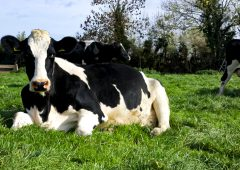 £21 million digital dairy project to create 600 jobs