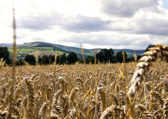 The future for tillage in Northern Ireland