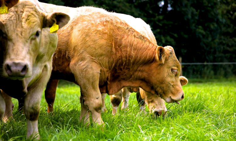 Rothamsted clarifies its position on meat consumption