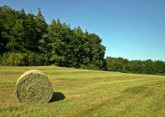 Safety tips for hay bales following 'number of hayshed fires'