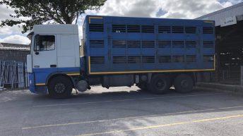 BVA welcomes new standards for animal welfare transport