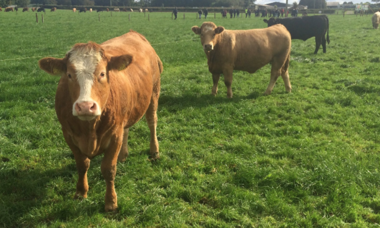 Details of Northern Ireland's new bovine TB strategy revealed