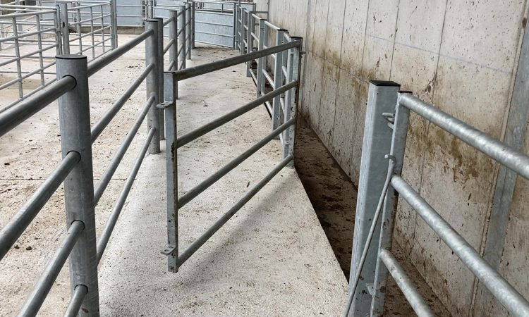 NI's new bovine TB strategy: What does it mean for farmers and what are the next steps?