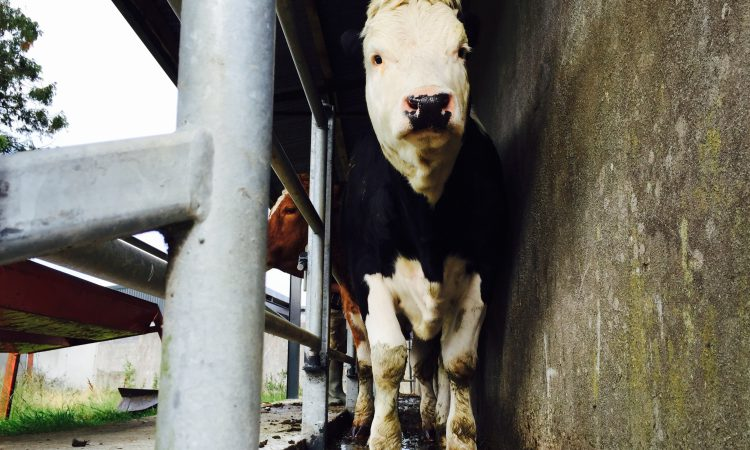 NI's draft TB strategy goes before Agriculture Committee in closed session