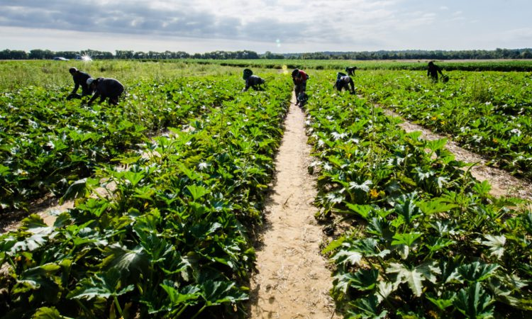 Seasonal agricultural workers to be exempt from NI travel restrictions