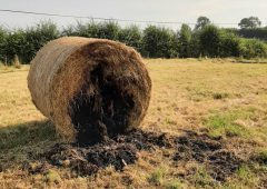 Appeal for information after bales set alight in field