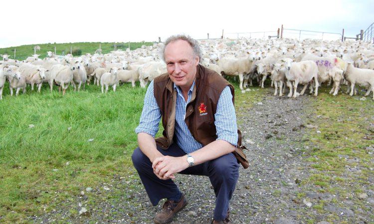 Irish Easy Care sheep embryos heading for New Zealand