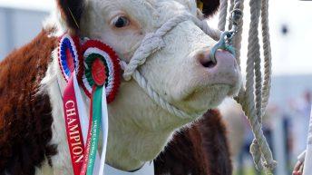 Livestock judges announced for 2021 Balmoral Show
