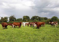 Randox Farming reports £6.1 million losses