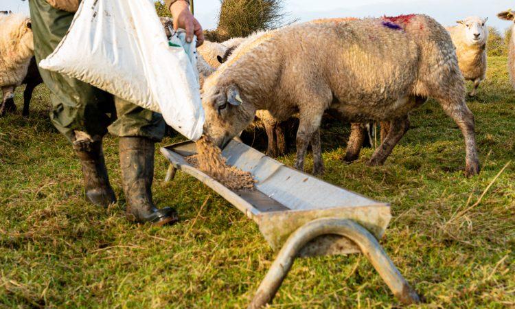 NFU Scotland launches #FarmingForTheFuture campaign