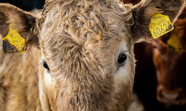 Farmers urged to share their bovine TB story in NI consultation