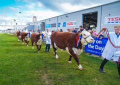 2021 Balmoral Show attendance 'around two-thirds' of normal turn-out