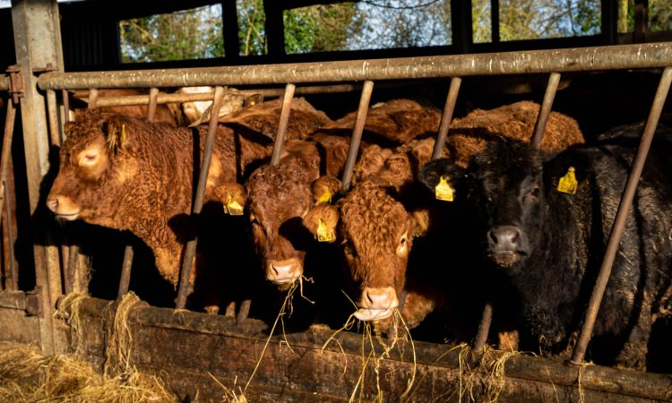 LMC welcomes new farm policy framework for Northern Ireland