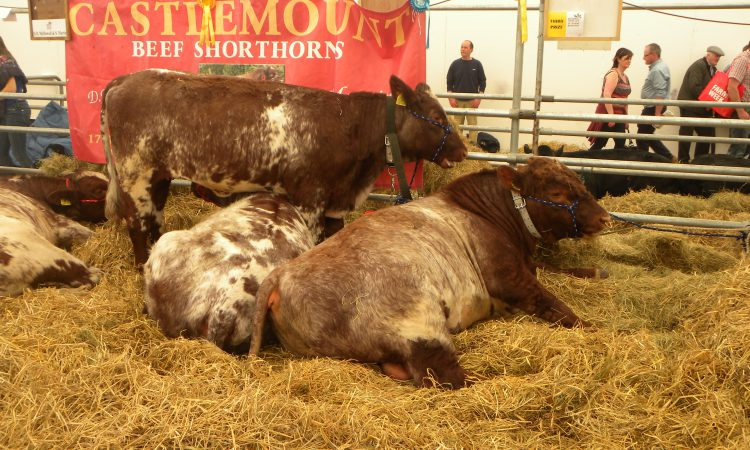 Balmoral Show 2021 – the jury is still out