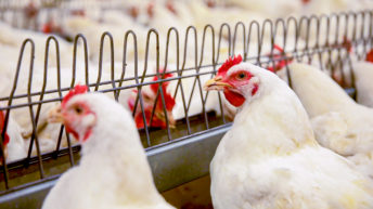 CO2 shortage: Supermarkets say NI poultry farms were 'days from crisis'