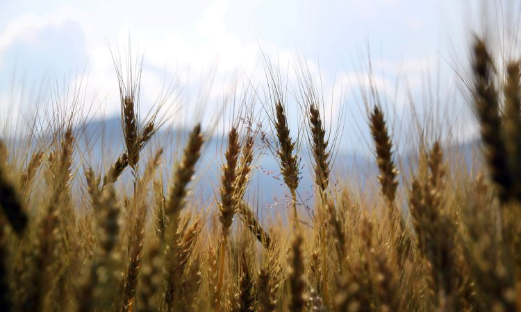 G20 countries urged to increase support for farmers in Afghanistan