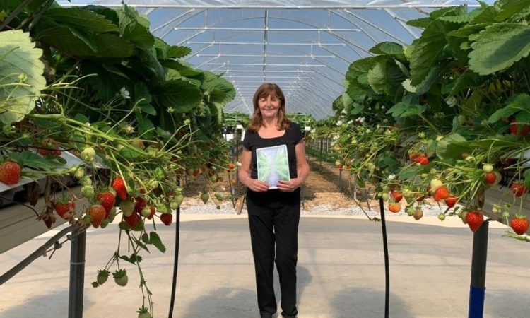 New vision to help increase innovative food growing in Wales