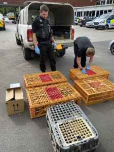 Yorkshire man jailed for 6 breaches of animal protection order