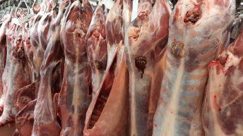 British sheepmeat mislabeled as Irish – Carthy