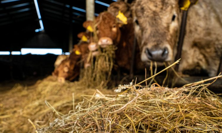 Cattle 'toilet trained' by researchers in bid to cut emissions