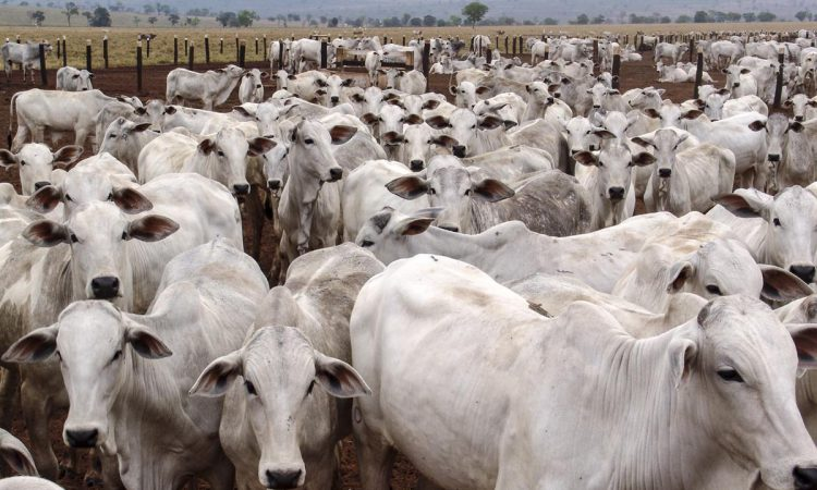 Brazil approves methane-reducing livestock feed additive