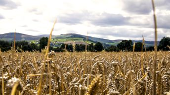 Global wheat prices up 41% with consumption hitting 'all-time high'