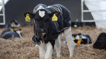 How well do you really clean your calf-rearing units?