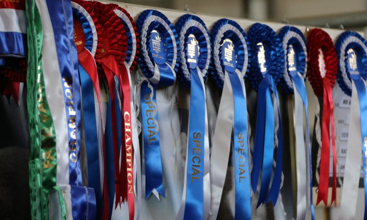 New 4 Breeds Calf Show launched for NI