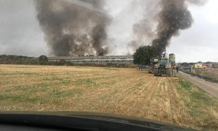 Pigs killed in Oxfordshire fire