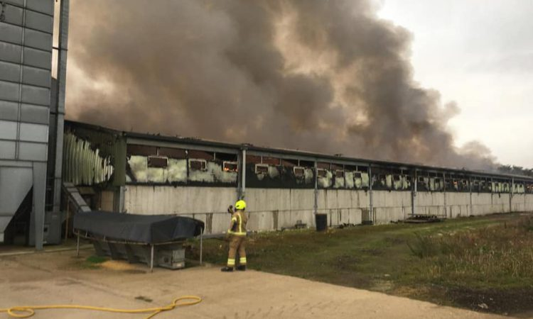 Insurers now investigating Oxfordshire pig-farm fire