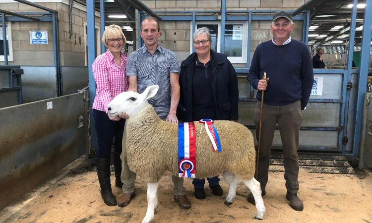 Border Leicester Sheep Society appoint 2nd ever female president