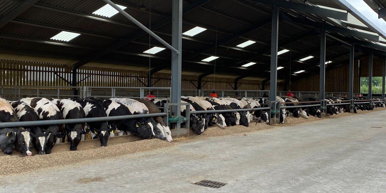 Cattle feeding LL Jun 20