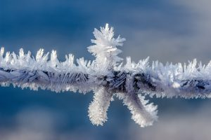 Gemini USD crypto frozen