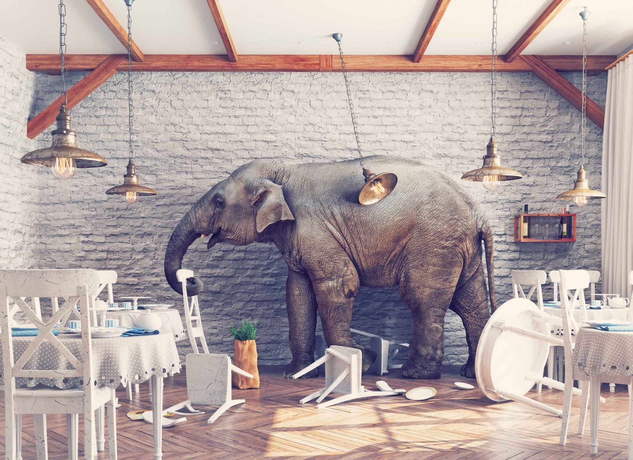 The elephant in the waiting room or why nobody else has got to the bottom of your back pain
