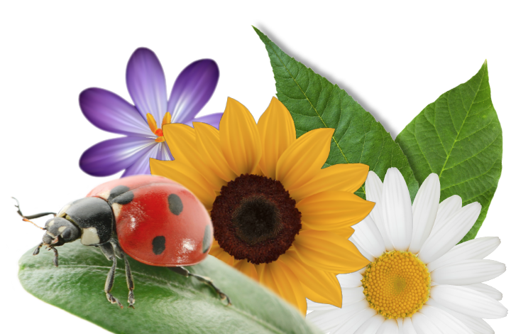 Why do ladybirds have spots?