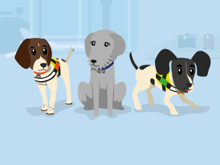 Static image from animation featuring three cartoon Border Paws dogs