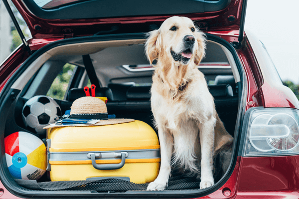 5 Fantastic Dog Friendly Cars