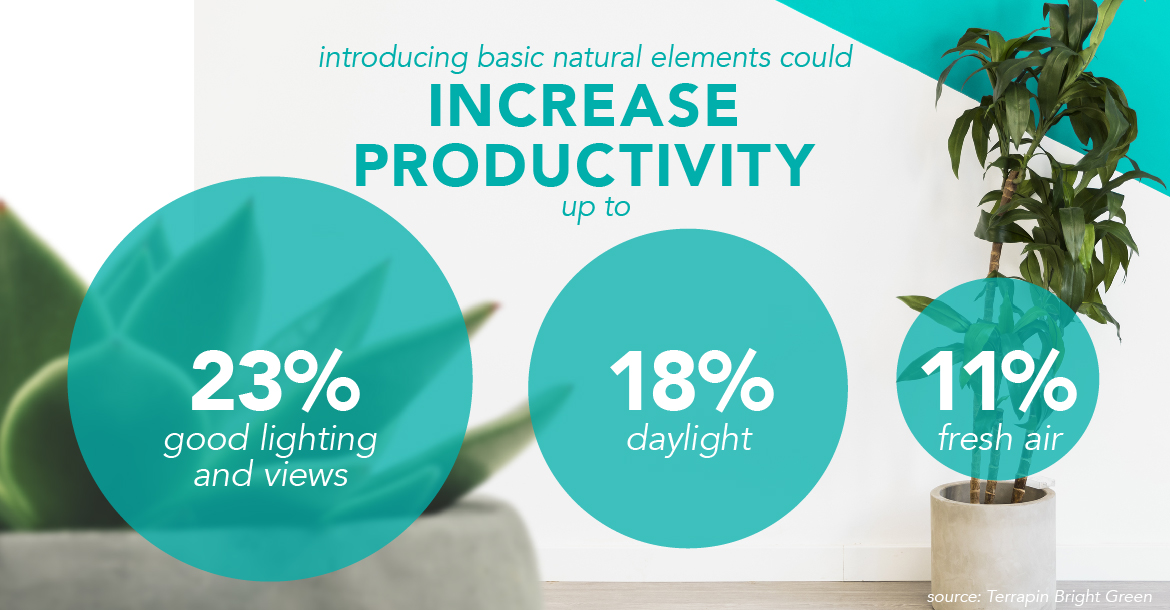 Introducing basic natural elements to your office design could increase productivity