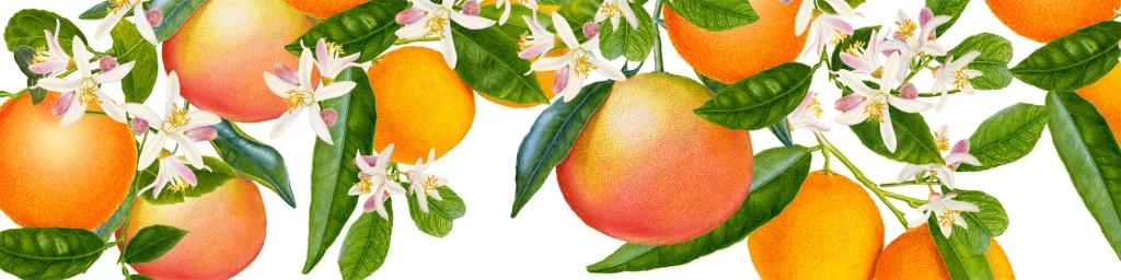 Carolyn-Jenkins-Darphin-Oranges